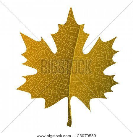 Orange maple leaf symbol isolated. With leaf veins realistic texture