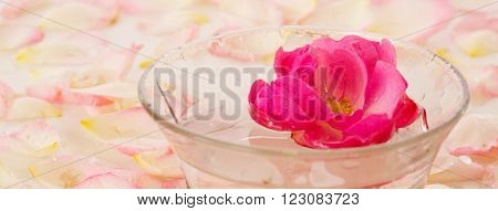 Infused water with rose petals in a reflection .Pink Rose in a bowl of water and white petals. ** Note: Shallow depth of field