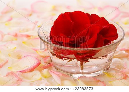 Infused water with rose petals in a reflection .Red Rose in a bowl of water and white petals. ** Note: Shallow depth of field