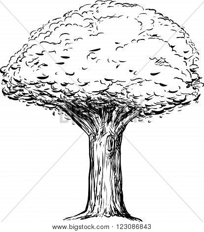 Outline Of Tree With Thick Trunk