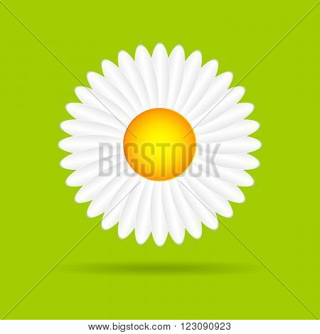 Abstract camomile on a green background. Flat daisy - vector illustration.