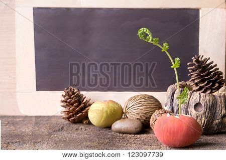 Still life,Fern plant growing in the easter egg on old wood with copy space for text on black board