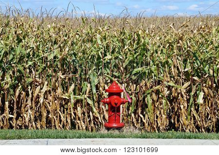 PLAINFIELD, ILLINOIS / UNITED STATES - SEPTEMBER 20, 2015: A red fire hydrant stands in front of a cornfield in Plainfield, Illinois.