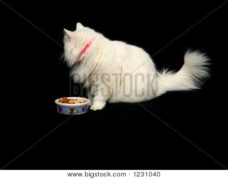 Finicky Cat