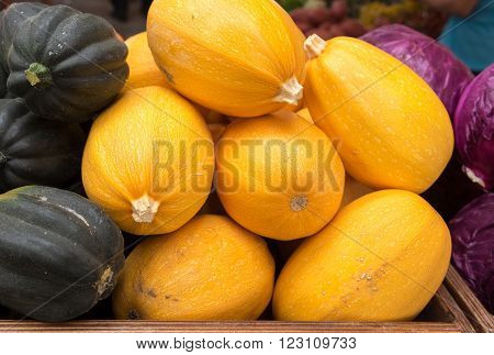 Cucurbita pepo  - organic squash pumpkin at farmers market