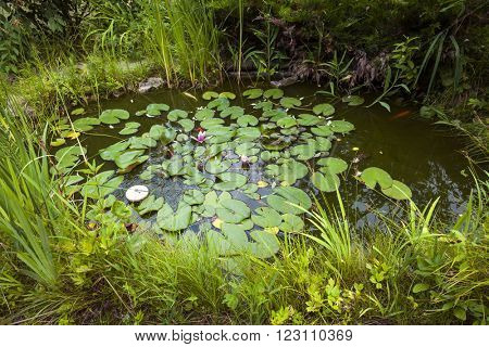 Small pond as part of landscaping with aquatic plants and water lilies surrounded by lush vegetation