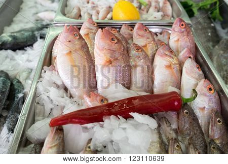 Red mullet fish on an ice at city market