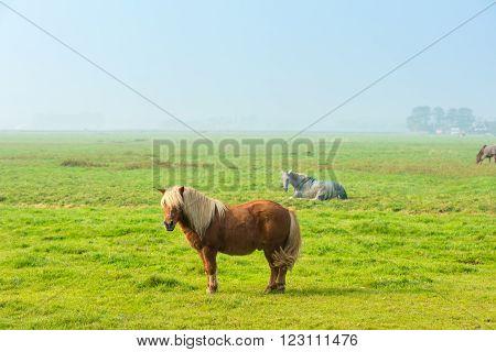 Chestnut Stallion Grazing On Green Grass