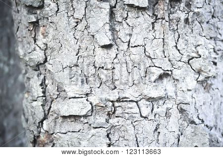 barkhusk rind or tree bark in the forest