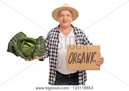 Senior farmer holding a Savoy cabbage and a cardboard sign that says organic isolated on white background