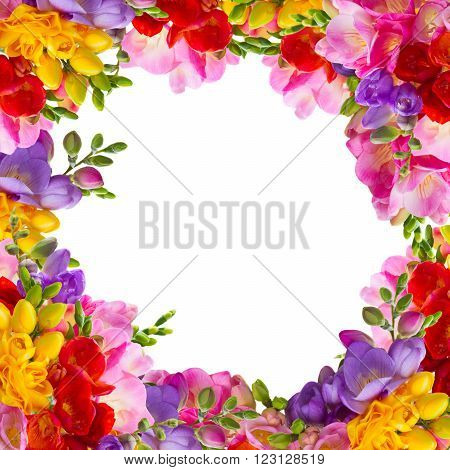 yellow, red, pink and blue freesia flowers frame isolated on white background