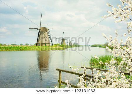 dutch windmills on river bank at spring, Kinderdijk, Holland