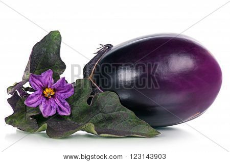 Fresh aubergine with blossom and leaves isolated over white background