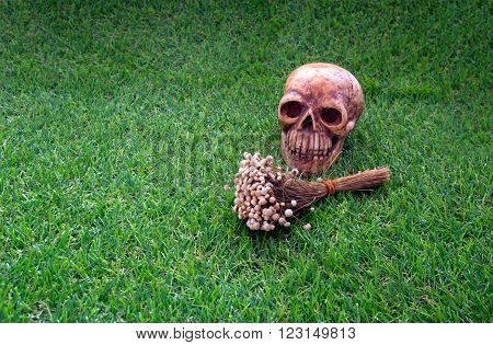 Still life of human skull and dry flower on green grass sign of deathStill life of human skull and dry flower