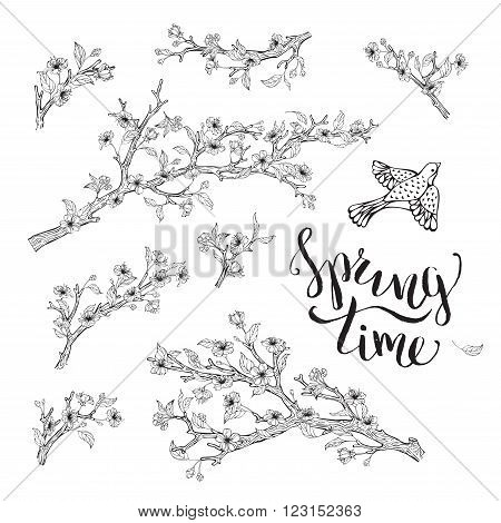 Vector Set Of Spring Branches Isolated On White Background.