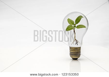 Showing a isolated buld and plant on a white background