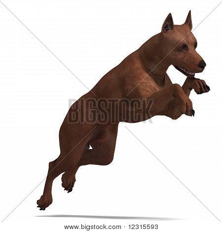 Cachorro Pinscher Miniatura