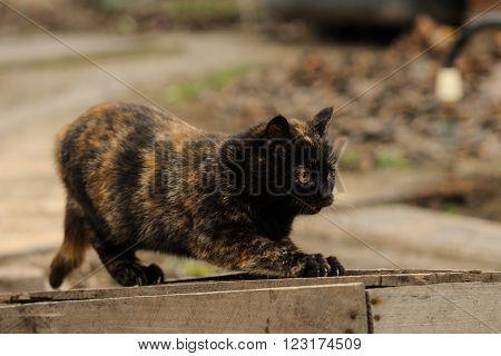 Tortoiseshell Torty fluffy cat sitting on the street countryside