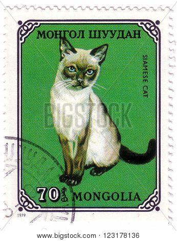 MONGOLIA- CIRCA 1979: A stamp printed in Mongolia shows Siamese cat, series, circa 1979