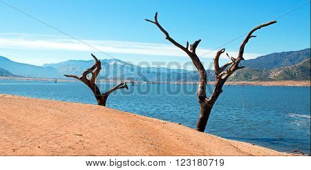 Dead Trees on the shores of the Kern River emptying into Lake Isabella in the Southern Sierra Nevada Mountain Range in Central California USA