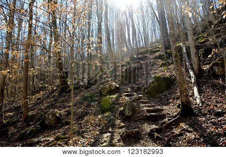 Scenic hiking path through the hardwood forest.  Sunshine streaming through the trees.