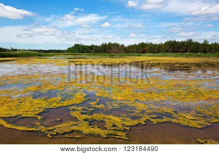 swamp in steppe under nice sky with clouds