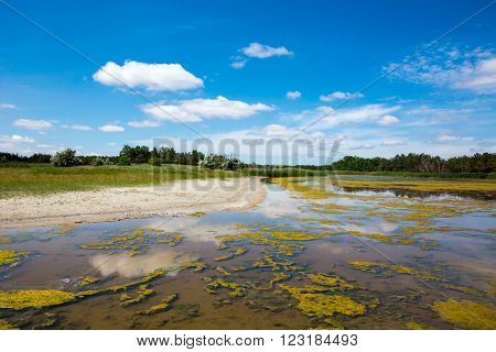 Summer scene with bog in steppe