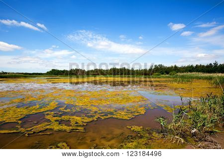landscape with swamp in steppe at summer day