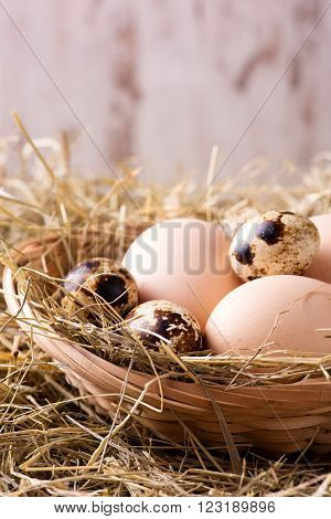 Quail And Hen Eggs On Straw Nest