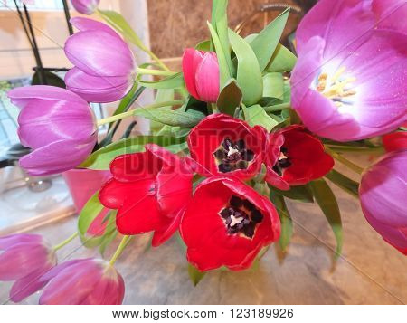 Large floral bouquet of red and purple tulips close-up
