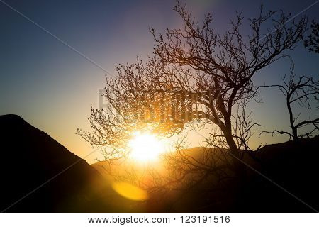 Silhouette of a dead tree at sunset