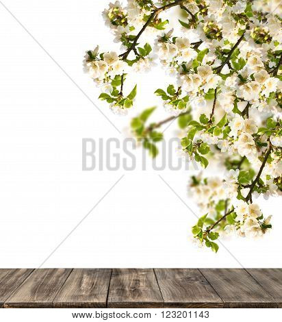 Wooden table with blossoming apple tree on white background. Spring flowers. Selective focus