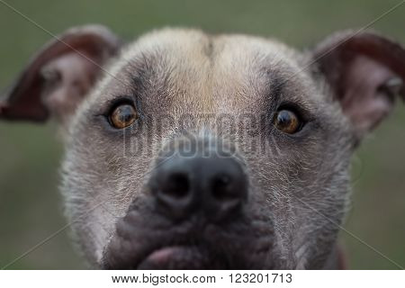 Funny portrait of a hairless dog on a blurred green background. Close-up selective focus image.