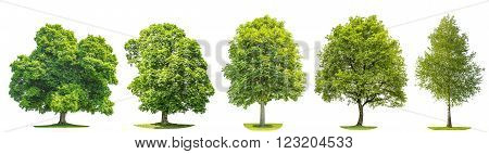 Set of green trees oak maple birch chestnut. Nature objects isolated on white background
