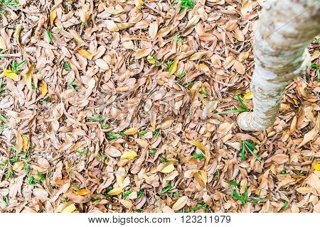 Beautify Texture Of Dried Leafs On Grass At Park