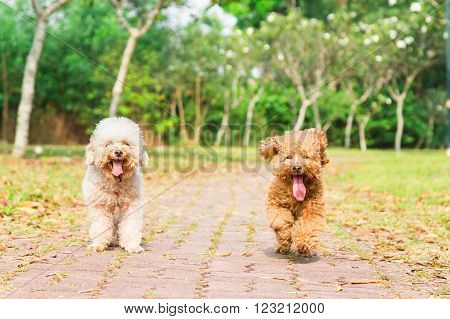 Tired Dogs With Long Tongue Resting After Exercise At Park