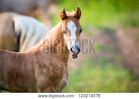 Emotion of small foal