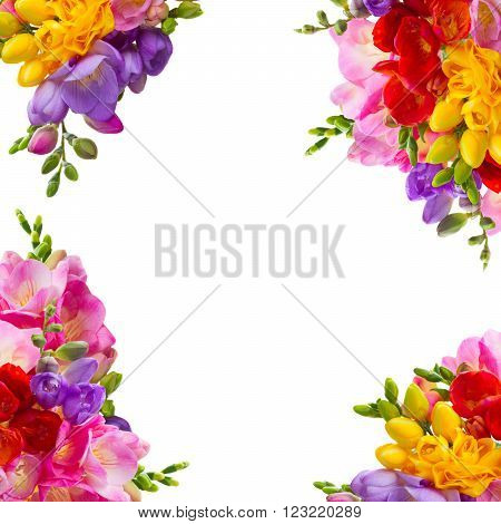 yellow, red, pink and blue freesia fresh  flowers frame isolated on white background