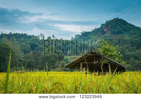 Hut and rice field in nature with moutain