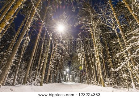 Winter forest road and trees covered with snow. Night scene street lights along road.