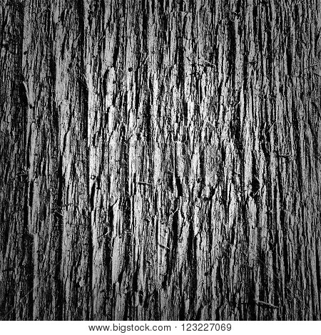 beautiful texture of wood or chipboard for the background or Wallpaper