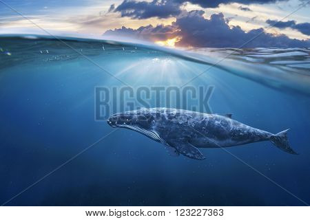 whale in half air half sky at sunset.