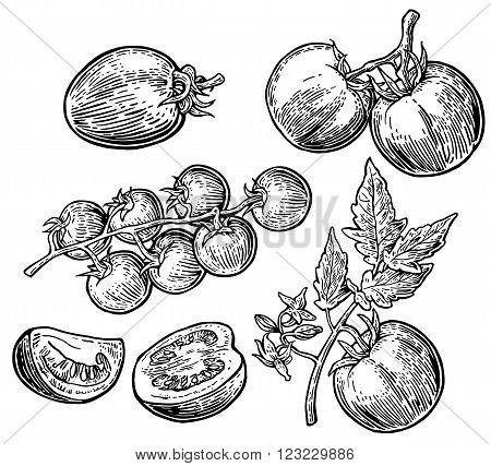 Set of hand drawn tomatoes isolated white background. Tomato half and slice isolated engraved illustration.