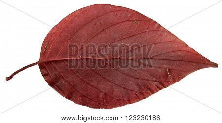 dried fall leaves of plants flowers and branches isolated elements on white background for scrapbook object roughage autumn leaf.