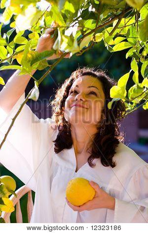 Girl picking fruit