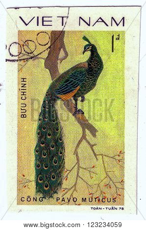 Vietnam - Circa 1978 : A Stamp Printed By Vietnam Shows Bird An Pavo Muticus, From The Series Orname