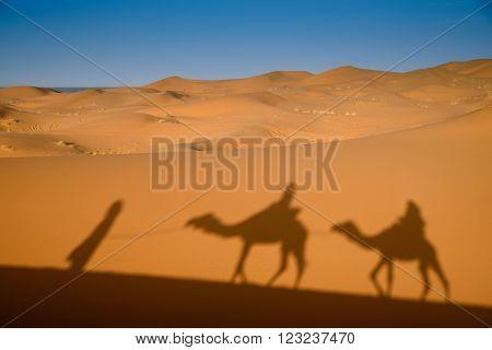 Camel Shadows On Sahara Desert Sand In Morocco.