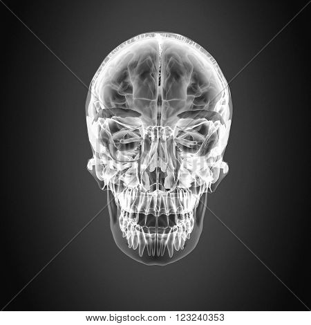 The facial skeleton, viscerocranium, or splanchnocranium consists of a part of the skull that is derived from the pharyngeal arches.