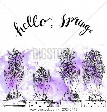 Hand drawn line art pot hyacinth flowers and bud. Hello spring lettering on purple watercolor splash. Spring hyacinth ink drawing for easter decor garden backgrounds floral design.