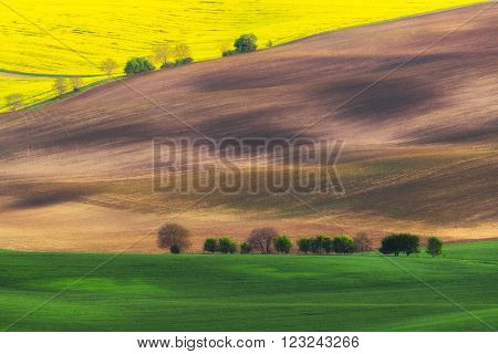Czech Republic. South Moravia. Moravian field, plowed land, rape